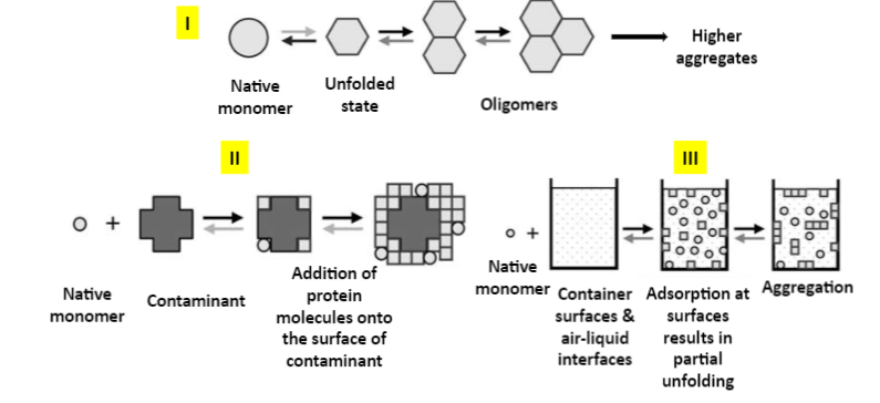 PROTEIN AGGREGATION