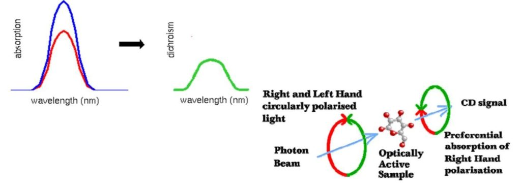 Higher Order Structure analysis by CD Spectroscopy